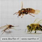 insecten horren voor raam en deur 31 jaar vakmanschap vraag advies aan Protectsun Amsterdam