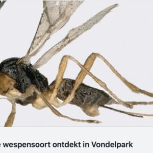 insecten-muggen-amsterdam-horren-protectsun